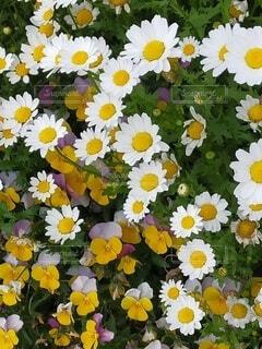 隅田川で見つけた花4の写真・画像素材[4381223]