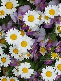 隅田川で見つけた花6の写真・画像素材[4381221]