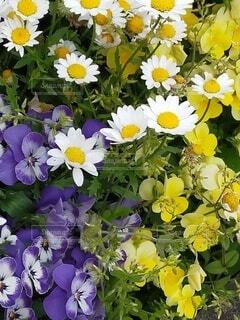 隅田川で見つけた花2の写真・画像素材[4381225]