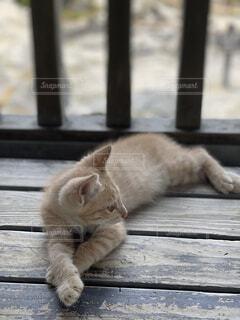 猫,ゴロゴロ,ダラダラ
