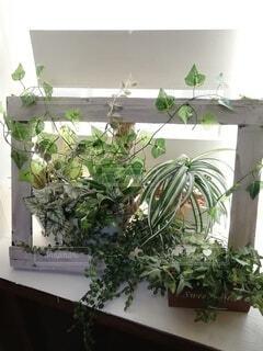 窓際で癒やしのグリーンの写真・画像素材[4366863]