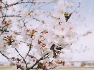 花のクローズアップの写真・画像素材[4364507]