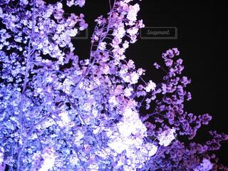 植物の上の紫色の花の写真・画像素材[4364512]