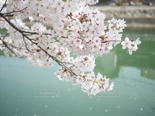 花のクローズアップの写真・画像素材[4364511]