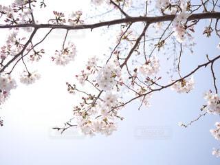 木の枝に止まっている鳥の写真・画像素材[4364514]