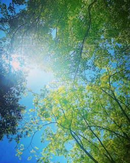 森林,森,緑,青空,景色,癒し,木陰,Green,ヒーリング