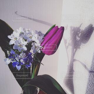 花,チューリップ,癒し,flower