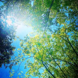 木漏れ日の写真・画像素材[4408953]