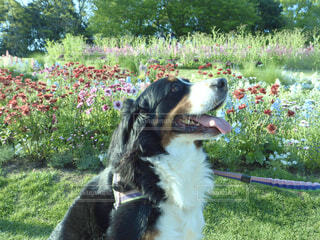 犬,花,屋外,白,草,樹木,子犬,草木