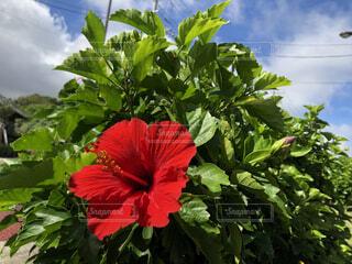 自然,空,花,庭,植物,青空,ハイビスカス,植木,花壇,草木