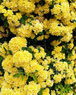 花,草木,黄色花,フローラ