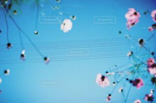 空の写真・画像素材[197052]