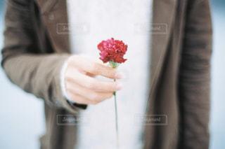 花,カーネーション,母の日