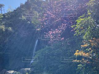 自然,空,桜,森林,屋外,太陽,沖縄,山,滝,樹木,パワースポット,太陽光,水流,さくら,やんばる,光の筋,轟の滝