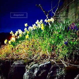 自然,風景,空,花,屋外,草木