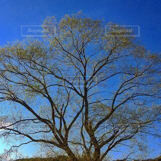 自然,風景,空,屋外,樹木,草木