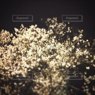 自然,風景,花,草木