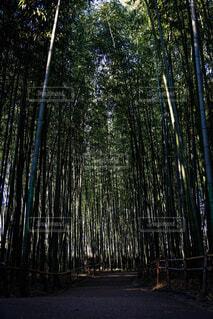 自然,風景,屋外,樹木,竹,草木
