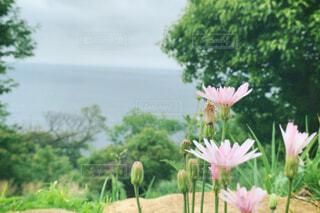 花と緑と青の写真・画像素材[4461113]