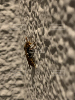 動物,屋外,昆虫,ハチ,早春,巣作り,朝まで待機中