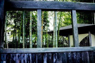 建物,屋外,窓,樹木,竹林,草木,木戸越し