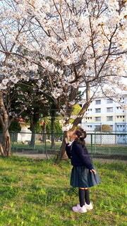 風景,桜,屋外,ピンク,樹木,人物,人