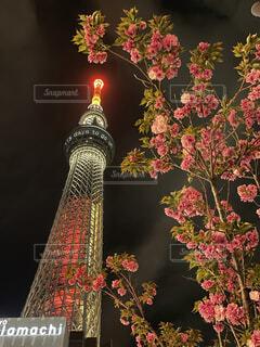 桜に灯をつけたスカイツリーの写真・画像素材[4370945]