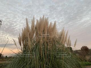 自然,風景,空,屋外,雲,水面,草,草木
