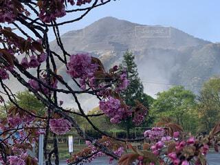 空,花,山,樹木,秩父,羊山公園,草木,ブロッサム,武甲山
