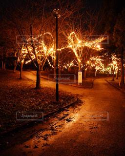 冬,夜,屋外,花火,散歩,暗い,樹木,イルミネーション,ライトアップ,地面,雨上がり,明るい,雨降り,夜散歩,街路灯