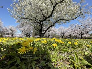 花,春,屋外,黄色,草,樹木,草木,ブルーム