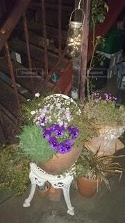 花,屋内,植木鉢,観葉植物,草木,ガーデン