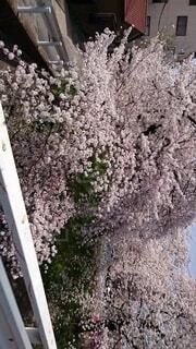 花,春,屋外,樹木,ブロッサム