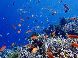 水中のグループの写真・画像素材[4369644]