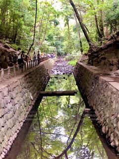 森の中の川の写真・画像素材[4386837]