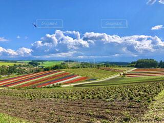 パッチワークの花畑とトンボの写真・画像素材[4386840]