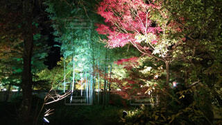 嵐山紅葉夜景の写真・画像素材[4375470]