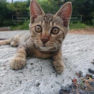 猫,動物,屋外,樹木,ネコ科