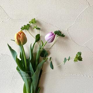 花,春,リビング,屋内,花束,チューリップ,癒し,草木