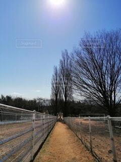 フェンスの間の小道の写真・画像素材[4370906]