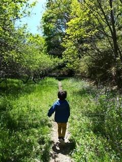風景,公園,森林,屋外,散歩,樹木,人物,新緑,人,立つ,幼児,少年,ハイキング,男の子,草木