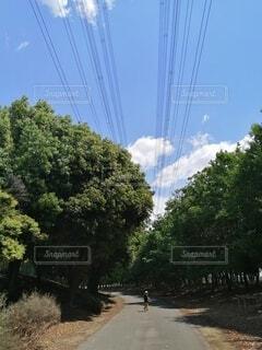 自然,空,公園,屋外,雲,樹木,初夏,男の子,お散歩,GW,子育て,子連れ,5月