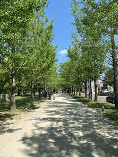 空,公園,春,屋外,緑,散歩,樹木,新緑,並木,並木道,草木