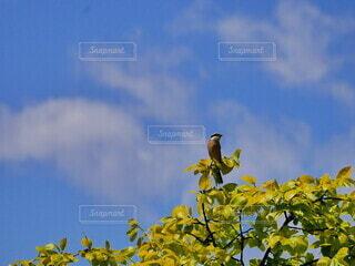 自然,空,花,動物,鳥,屋外,青,青い空,小鳥,景観,草木,日中,百舌,百舌鳥,モズ