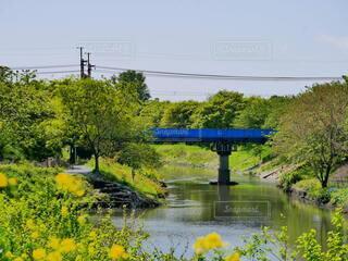 自然,空,春,橋,屋外,湖,緑,電車,散歩,黄色,川,水面,池,田舎,樹木,散歩道,青い橋,草木,のどか