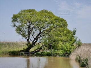 自然,風景,空,屋外,湖,川,水たまり,水面,池,草,樹木,倒木,サバンナ,湿地,泥地