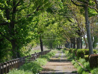 公園,屋外,草,樹木,草木,ガーデン,パス