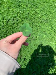 緑,葉,人物,人,草木,四葉