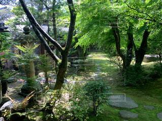 自然,公園,屋外,草,樹木,ジャングル,草木,ガーデン,パス