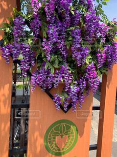 花,屋外,紫,ラベンダー,藤の花,草木